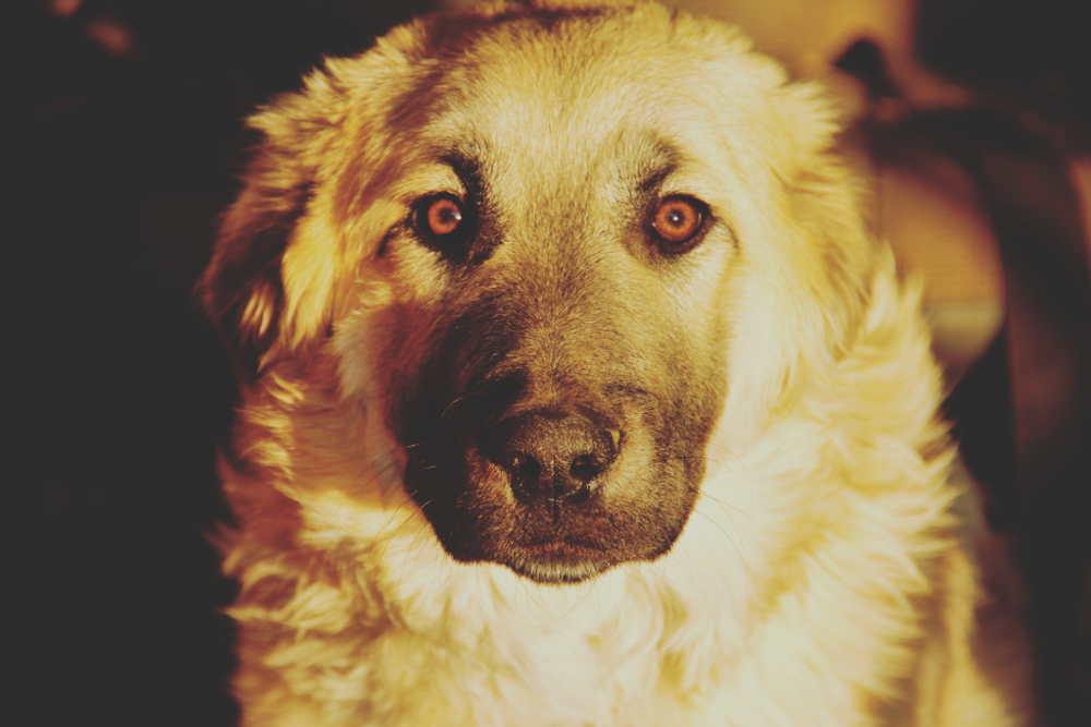 Chapitre 4 : la nation des chiens